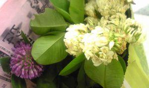090429-clover.jpg